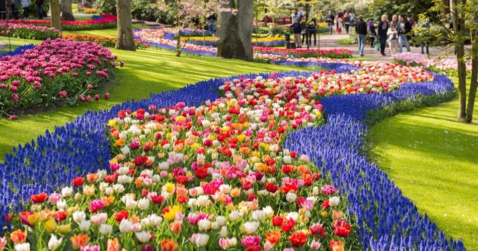 Foto - Zaanse Schans, Amsterdam, Keukenhof - Zaanse Schans, Amsterdam a největší kvetoucí park v Evropě Keukenhof